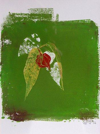Lampionplant, Mareike Henkel